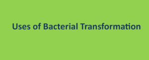 Uses of Bacterial Transformation