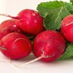 9 Uses of radish